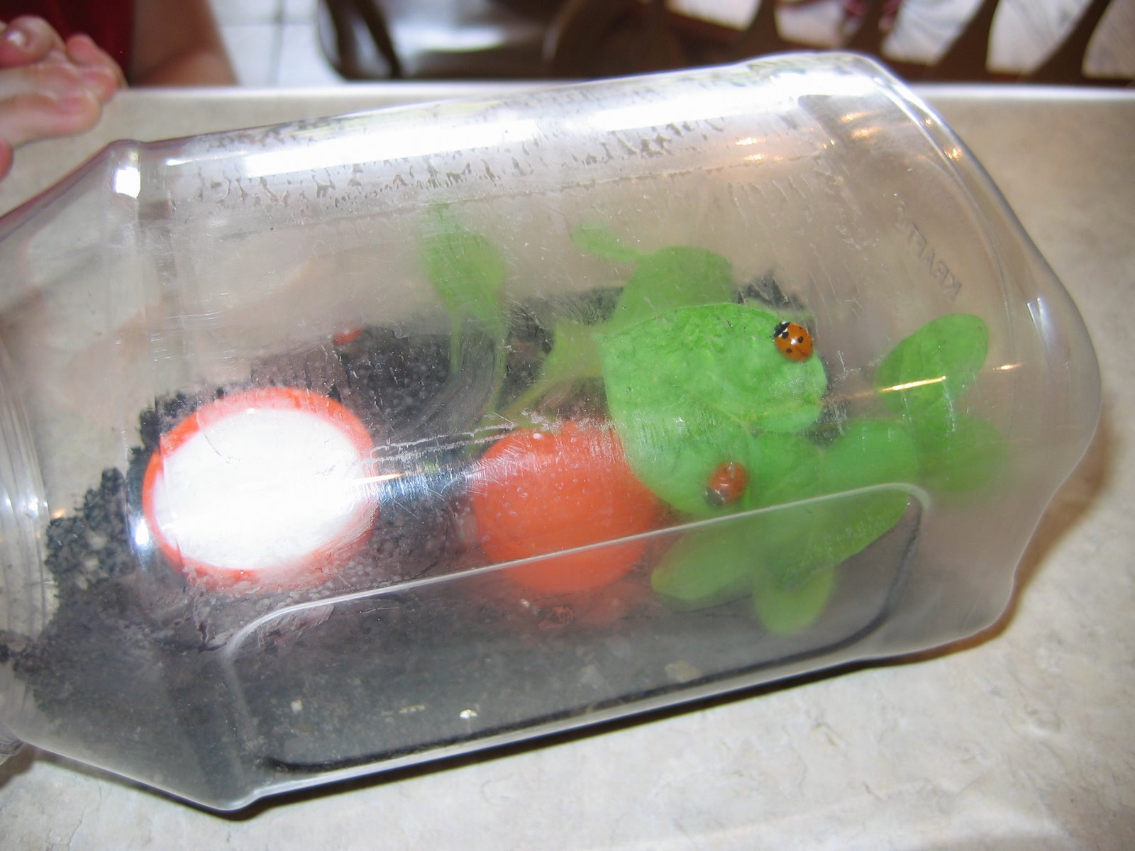 Sweet Pea Has Been Reading In Nature Friend, And Decided After Several  Articles On Keeping Ladybugs As Pets, That She Too Wanted To Create A  Habitat For ...
