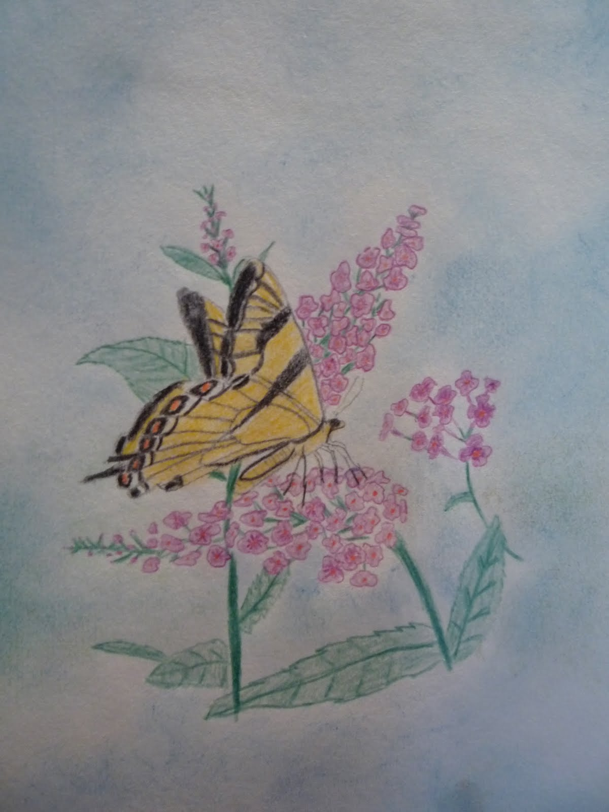 Her Sketching Is Becoming Quite Lovely And She Enjoys The Use Of Color Pencils As Well Watercolor Preferred Mediums
